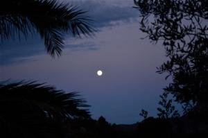 La luna, Sa Piana, le palme e gli ulivi