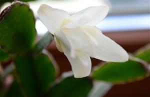 Grassa in fiore