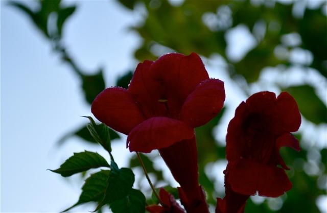 il Rosso